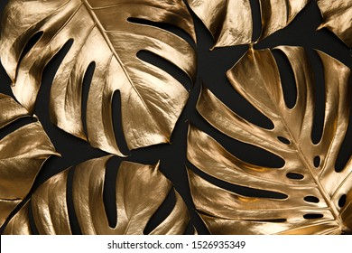 Tropical monstera leaves creatively arranged on black background. Trendy luxury fashion pattern design. Natural botany floral composition.