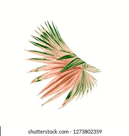 tropical nature green fan windmill palm leaf pattern on white