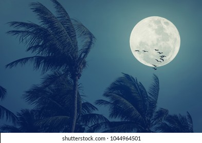 Tropical night. Full moon and palm leaf birds fly abstract background. Copy space of nature environment and travel adventure concept. Vintage tone filter effect color style.