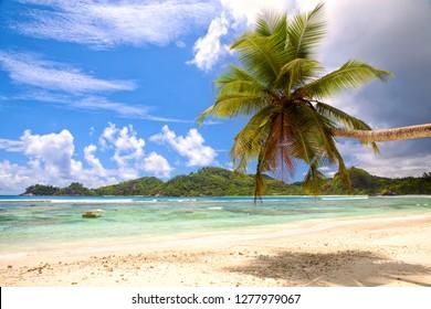 Tropical palm beach with white sand, Seychelles