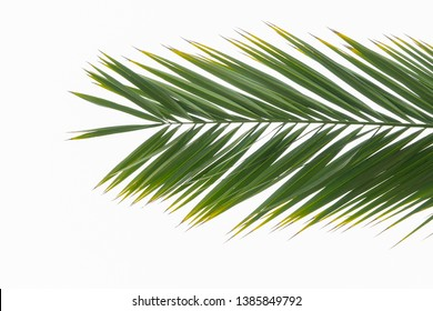 Tropical palm branch isolated on a white background. Summer is coming concept. Flat lay top view
