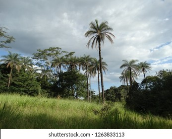 tropical palm in florest