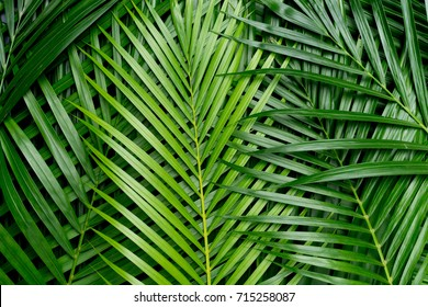 tropical palm foliage, greenery background