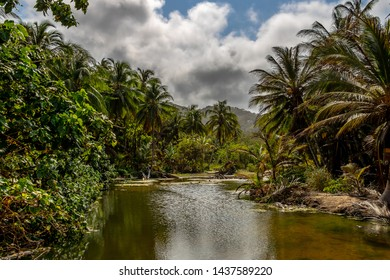 tropical palm forest with shallow river near the sea in the caribbean Tayrona National Park Colombia