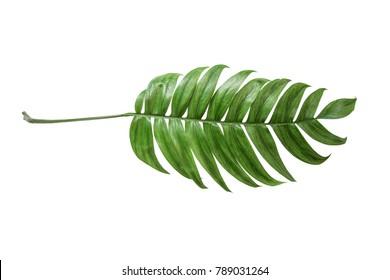Tropical palm leaf.