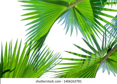 tropical palm leaf background, palm trees perspective view