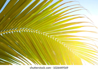 Tropical Palm Leaf in Bright Sunlight