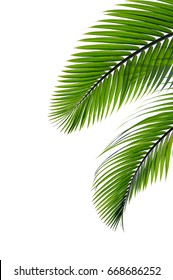 tropical palm leaf isolated on white background