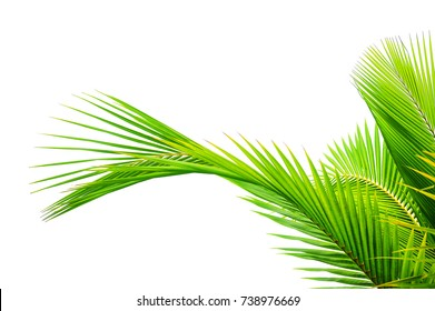 tropical palm leaf isolated on white background for elements design