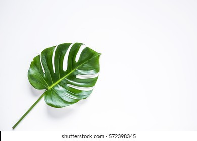 Tropical palm leaf isolated.view from above