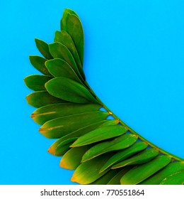 Tropical palm leaf Minimal Art