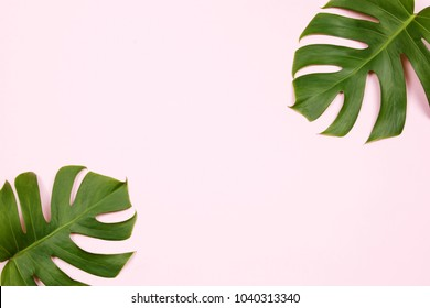 Tropical palm leaf on pink background. Flat lay, top view. Summer background
