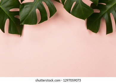 Tropical palm leaf on pink background. Flat lay, top view - Image.