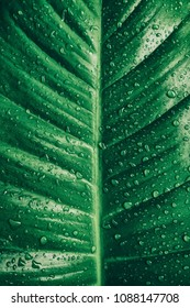 tropical palm leaf with rain droplets, dark green foliage texture backgrounds
