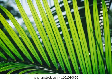 tropical palm leaf, sunlight on large green foliage in jungle