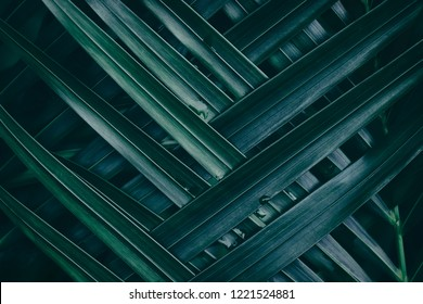 tropical palm leaf texture, dark green foliage, nature background