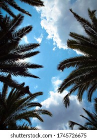 Tropical palm leaves and blue sky