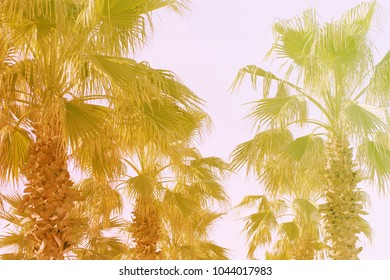 Tropical Palm Leaves Branches Sun Light Natural Background