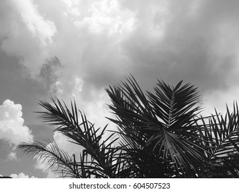 Tropical palm leaves with cloud sky natural background and copy space.Black and white style.