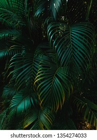 Tropical Palm leaves in the garden, Green leaf of tropical forest plant for nature pattern and background, People grow plants to make fences. color dark flat lay tone for input text.