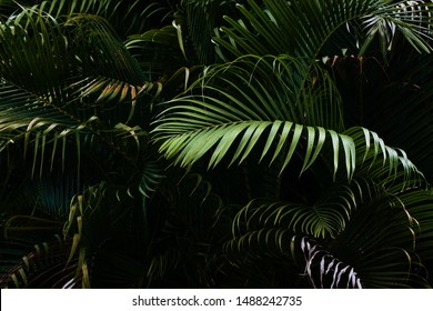 Tropical Palm leaves in the garden, Green leaves of tropical forest plant for nature pattern and background, People grow plants to make fences. color dark flat lay tone for input text