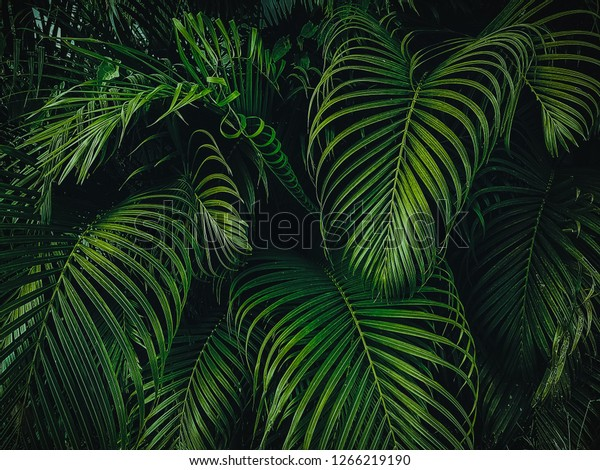 Tropical Palm Leaves Garden Green Leaves Stock Photo Edit Now 1266219190 Tropical leaf palm print, showing various tropical plants together in one poster. https www shutterstock com image photo tropical palm leaves garden green forest 1266219190