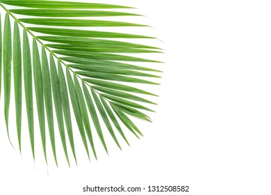 tropical palm leaves isolated on white background