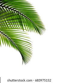 tropical palm leaves isolated on white background for elements design