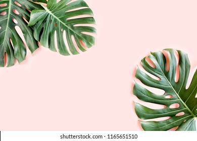 Tropical palm leaves Monstera on pink background. Flat lay, top view