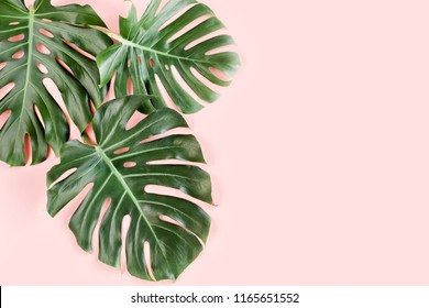 Tropical Leaves Pink Background Images Stock Photos Vectors Shutterstock Our customizable tropical desktop wallpapers are ready to use as is or personalized to suit your style. https www shutterstock com image photo tropical palm leaves monstera on pink 1165651552