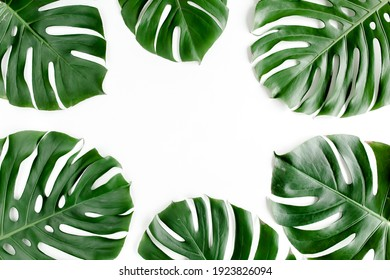 Tropical palm leaves Monstera on white background. Flat lay, top view.