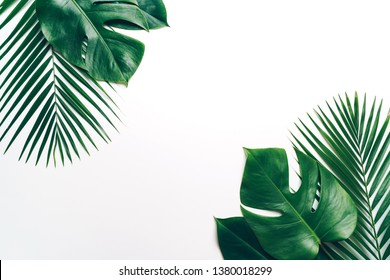 Tropical palm leaves on color background with copy space