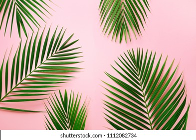 Tropical palm leaves on pastel pink background. Minimal summer concept. Creative flat lay with copy space. Top view green leaf on punchy pastel paper.