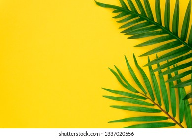 Tropical palm leaves on pastel yellow background. Minimal summer concept. Creative flat lay with copy space. Top view tropical green leaf on pastel color paper.