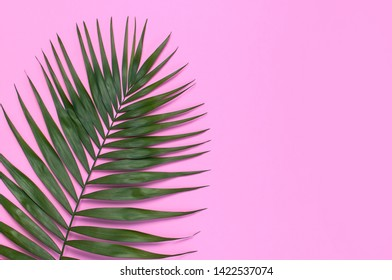 Tropical palm leaves on pastel pink background. Flat lay, top view, copy space. Summer background, nature. Creative minimal background with tropical leaves. Leaf pattern