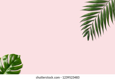 Tropical palm leaves on a pink background for designs. Summer Styled. High quality image. Top view