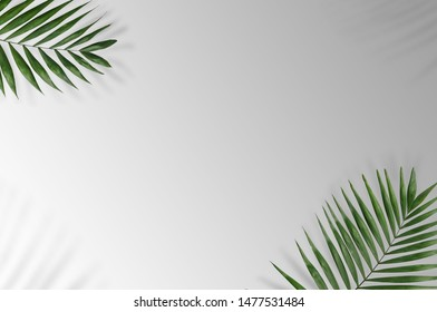 Tropical palm leaves on a white and grey background for designs. Summer Styled. High quality image. Top view