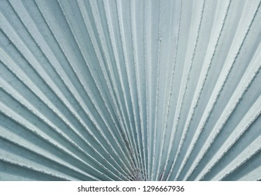 Tropical palm leaves for pattern and background