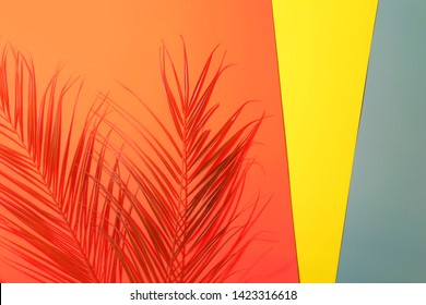 Tropical palm leaves with shadows on coral and yellow background. Summer concept.