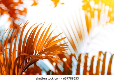 tropical palm leaves with sunlight on blurred nature background