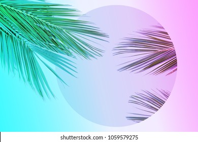 Tropical palm leaves in vibrant gradient neon colors. Minimal summer background.
