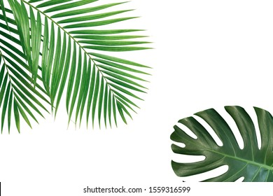 Tropical palm and monstera leaves isolated on white background.
