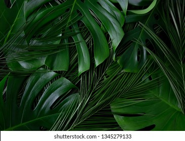 Tropical palm, monstera leaves layout texture. Rainforest closeup flat lay texture.