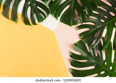 Tropical palm Monstera leaves on summer yellow and pink background. Flat lay, top view