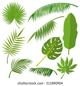 Tropical palm tree jungle leaves set. Leaf natural of jungle, green exotic leaves branch illustration