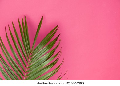 Tropical palm tree leaf on a trendy pastel pink background