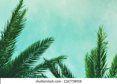 Tropical Palm Tree Leaves Border Background, Horizontal