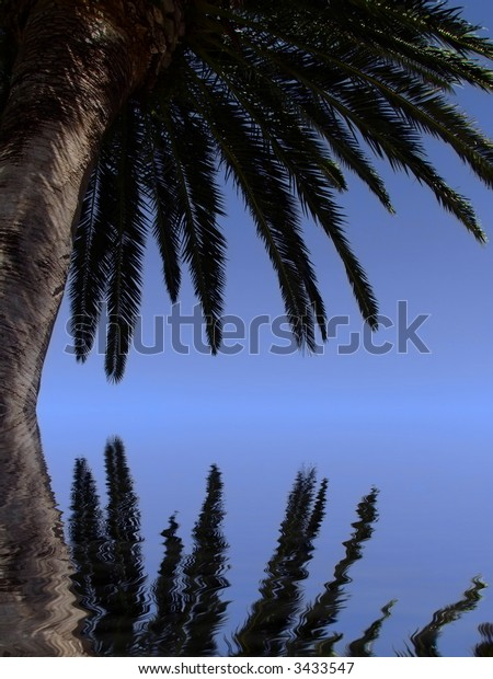 Tropical palm tree reflected in calm ocean waters