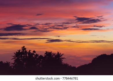 tropical palm tree at sunset