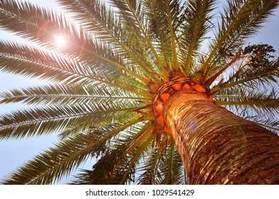 Tropical palm tree and sunshine shining through the canopy